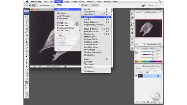 Understanding exposure controls: Photoshop CS3 Extended for BioMedical Research
