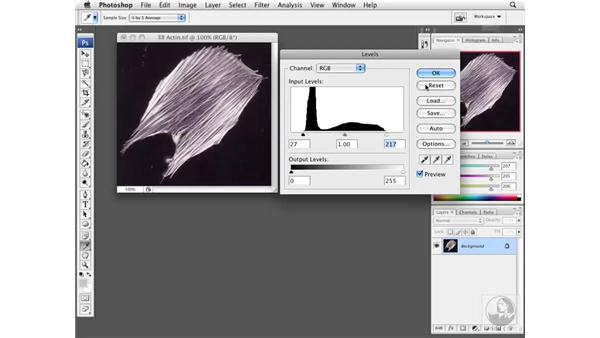 Optimizing exposure with Levels: Photoshop CS3 Extended for BioMedical Research