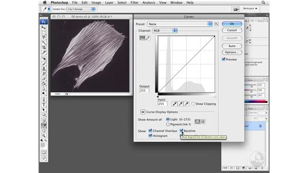 Optimizing exposure using Curves: Photoshop CS3 Extended for BioMedical Research