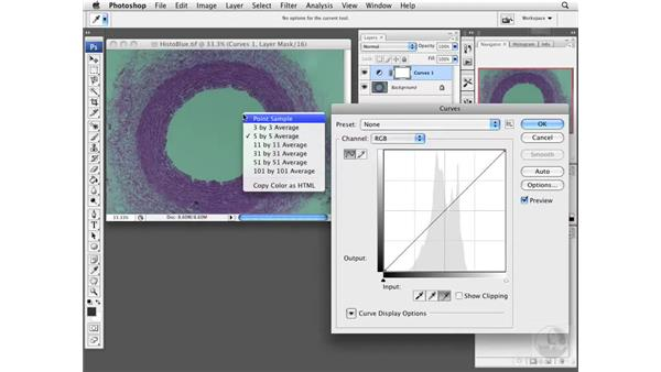 Working with adjustment layers: Photoshop CS3 Extended for BioMedical Research