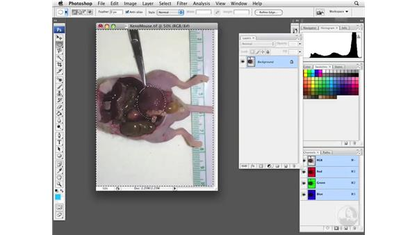 Using selective desaturation: Photoshop CS3 Extended for BioMedical Research