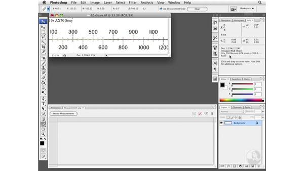 Using the ruler tool with calibration: Photoshop CS3 Extended for BioMedical Research