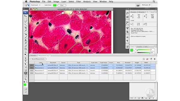 Extracting data from the Measurement Log: Photoshop CS3 Extended for BioMedical Research