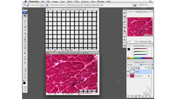 Adding Scale bars manually : Photoshop CS3 Extended for BioMedical Research