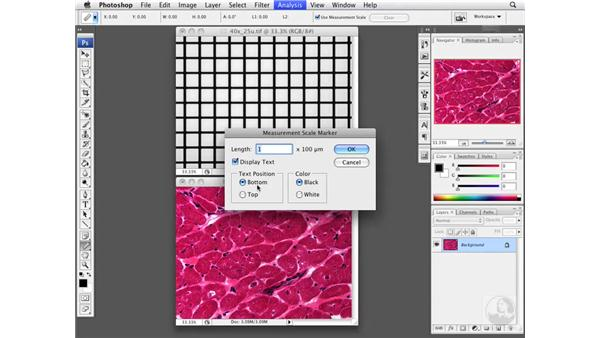 Adding Scale bars automatically: Photoshop CS3 Extended for BioMedical Research