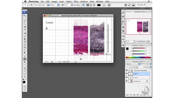 Adding text to images: Photoshop CS3 Extended for BioMedical Research