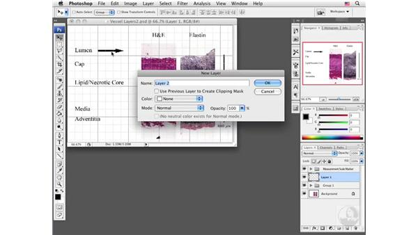 Adding arrows to images: Photoshop CS3 Extended for BioMedical Research
