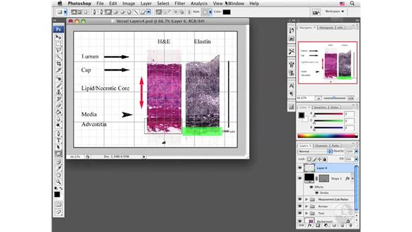 Adding borders to images: Photoshop CS3 Extended for BioMedical Research