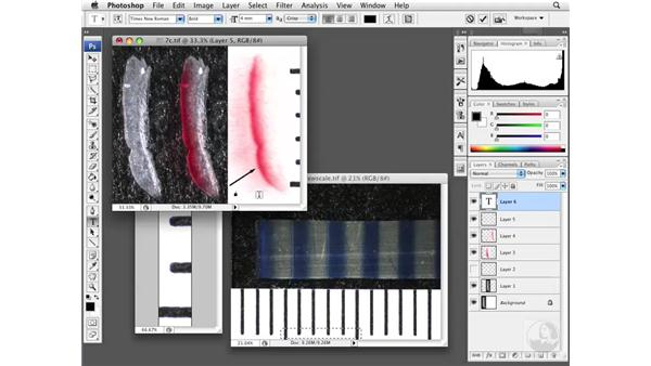 Applying finishing touches: Photoshop CS3 Extended: Research Methods and Workflows