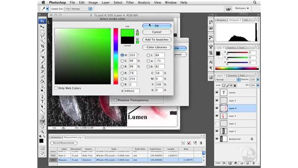 Measuring length and area with Refine Edge: Photoshop CS3 Extended: Research Methods and Workflows