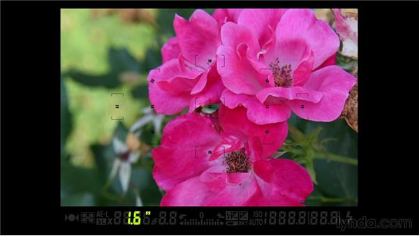 Touring the viewfinder: Up and Running with the Nikon D600 and D610