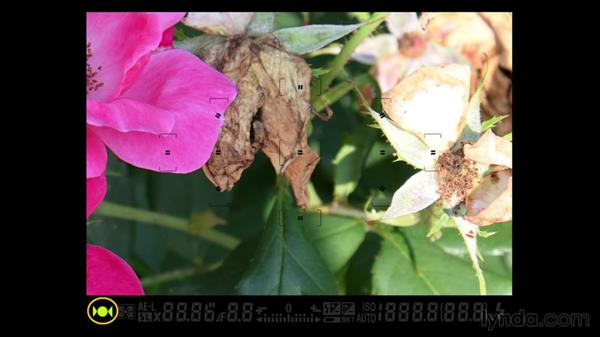 Autofocus basics: Up and Running with the Nikon D600 and D610