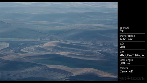 Isolating a row of trees in the landscape: Landscape Photography: Washington's Palouse Region