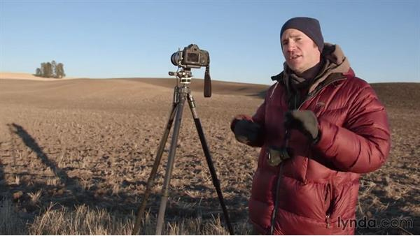 Shooting the same row of trees up close: Landscape Photography: Washington's Palouse Region