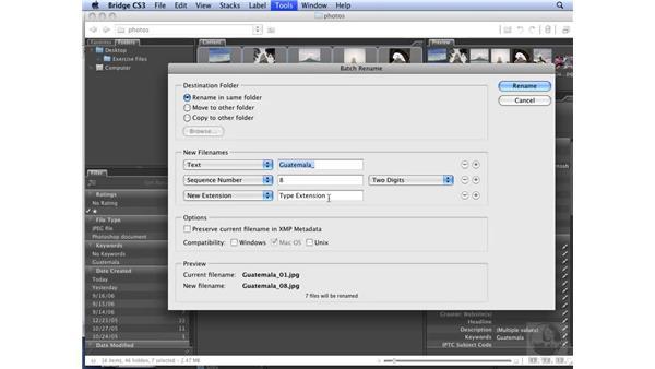 Managing files with Bridge: InDesign CS3 Long Documents
