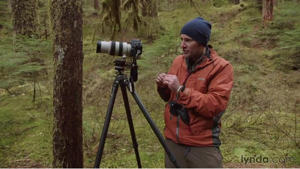 Isolating the mossy trees in a busy forest: Landscape Photography: Washington's Olympic National Park