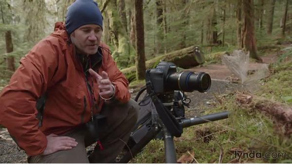 Getting a macro shot on the forest floor: Landscape Photography: Washington's Olympic National Park