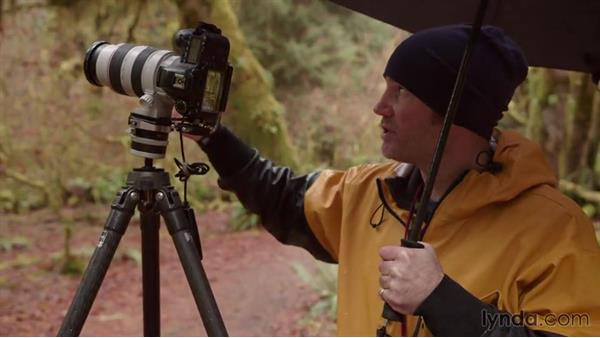 Shooting trees in the Hall of Mosses with a long lens: Landscape Photography: Washington's Olympic National Park