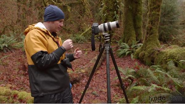 Using a long lens to isolate patterns in the moss: Landscape Photography: Washington's Olympic National Park