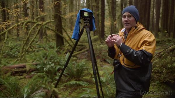 Finding a shot of fall-foliage color in the Hoh Rain Forest: Landscape Photography: Washington's Olympic National Park