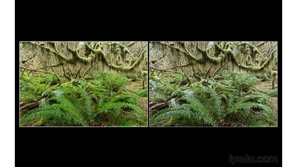 Comparing shots with polarization: Landscape Photography: Washington's Olympic National Park