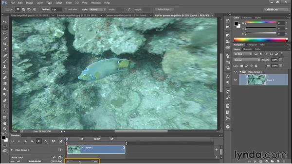 Selecting the best frame of a fish in motion: Enhancing Underwater Photos with Photoshop