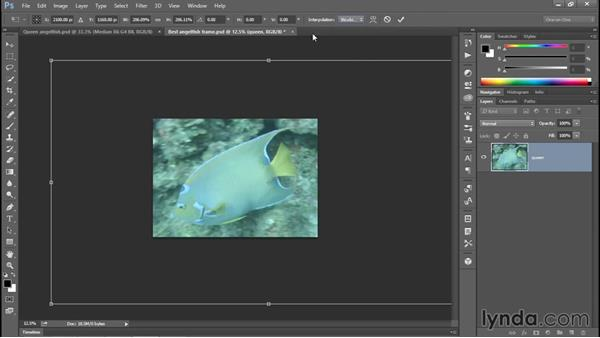 Permanently (and fearlessly) upsampling an image: Enhancing Underwater Photos with Photoshop