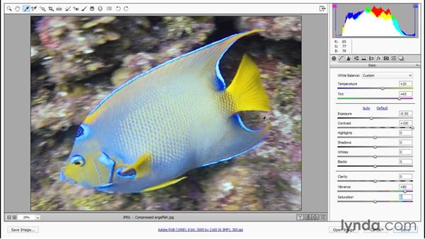 Bringing out color and beauty in Camera Raw: Enhancing Underwater Photos with Photoshop
