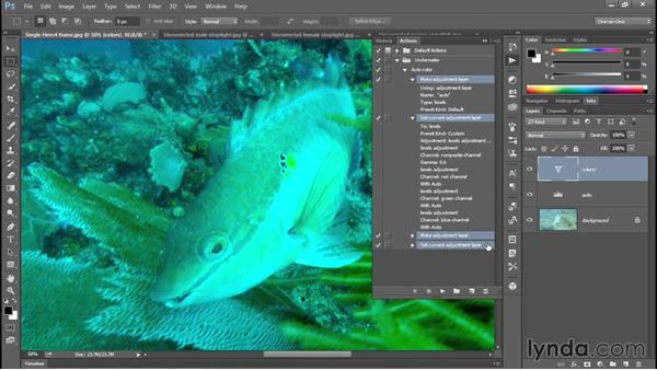 Recording the Auto Levels trick as an action: Enhancing Underwater Photos with Photoshop