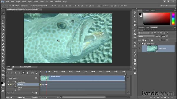 Animating the position of a cropped movie: Enhancing Underwater Photos with Photoshop