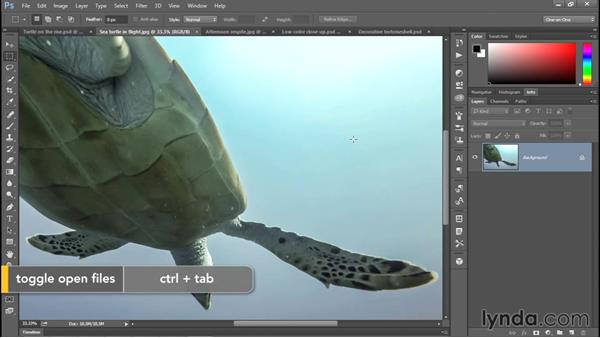 The most magical reptile of all: Enhancing Underwater Photos with Photoshop