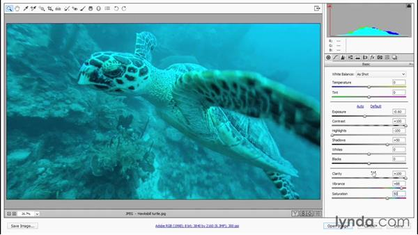Developing a turtle in flight: Enhancing Underwater Photos with Photoshop