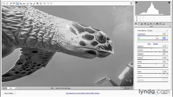 Developing a black-and-white turtle: Enhancing Underwater Photos with Photoshop
