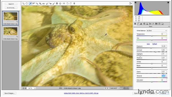 Developing multiple octopuses at a time: Enhancing Underwater Photos with Photoshop