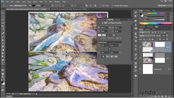 Adding black borders and white margins: Enhancing Underwater Photos with Photoshop