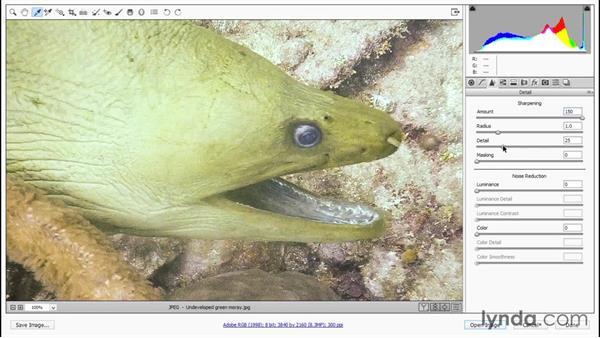 First, we develop a still frame: Enhancing Underwater Photos with Photoshop
