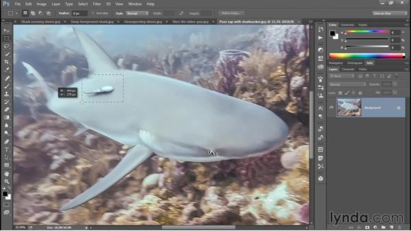 How a shark-dive works: Enhancing Underwater Photos with Photoshop