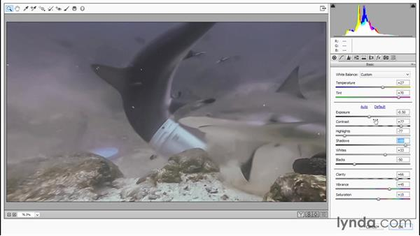 Sweetening the shark movie in Camera Raw: Enhancing Underwater Photos with Photoshop
