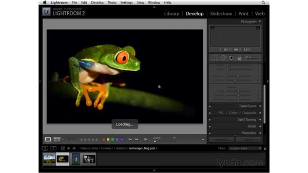 Using the Vibrance and Saturation controls: Lightroom 2 Essential Training
