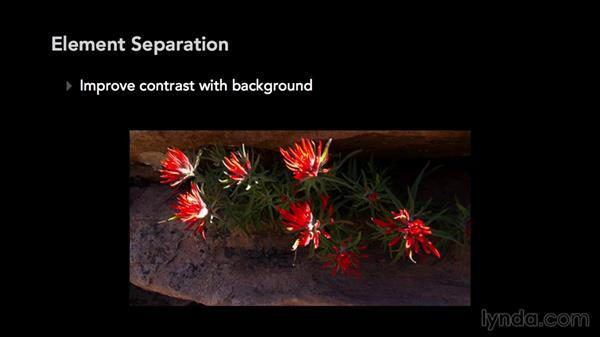 Separation techniques: Exploring Composition in Photography