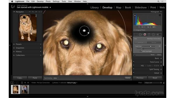 Correcting the eyes in a pet photograph: Lightroom: 2015 Creative Cloud Updates