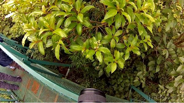 Advice when walking in a cloud forest: Travel Photography: Costa Rica