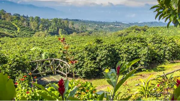 Chocolate, coffee, and commerce: Travel Photography: Costa Rica
