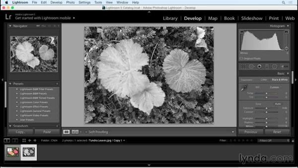 Evaluating the photo and making an initial conversion: Creating Black-and-White Landscape Photos with Lightroom