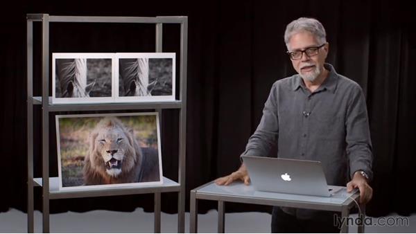 Defining dynamic range: Exploring Photography: Exposure and Dynamic Range