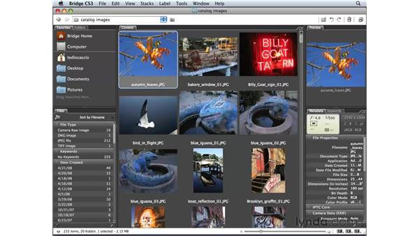 Understanding Photoshop Elements: Photoshop Elements 6 for Mac Essential Training