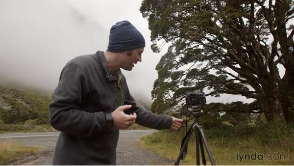 Isolating a tree in a lush landscape shot: Photographing the Fjords of New Zealand