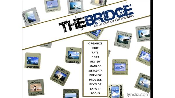 Bridge as a digital light box: Photoshop CS4 for Photographers
