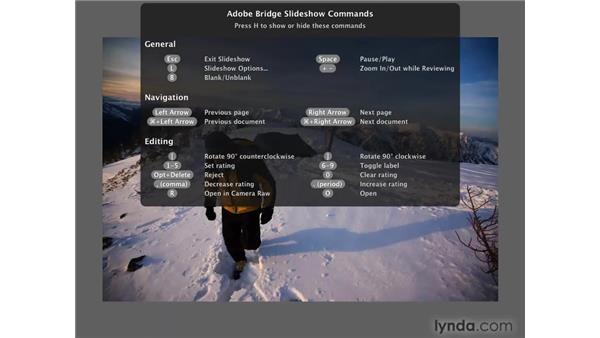 Bridge slideshows: Photoshop CS4 for Photographers