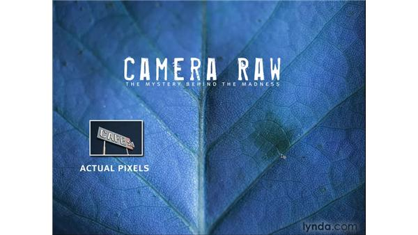 What is Camera Raw?: Photoshop CS4 for Photographers